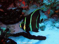 A cute little fish. by Cheri Denn