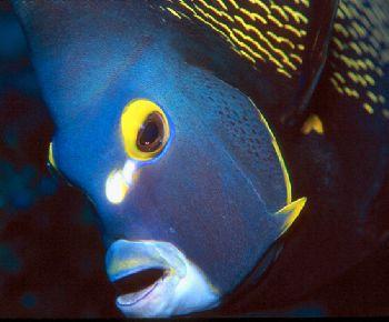 Angel face.  Taken in Grand Cayman. by Beverly J. Speed