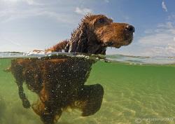 Doggy paddle. Omey Strand, Connemara. by Mark Thomas