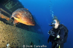 Giant grouper welcomes diver to the Madeirense Wreck, Por... by José Carvalho