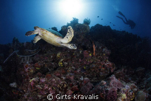 Turtle and diver by Girts Kravalis