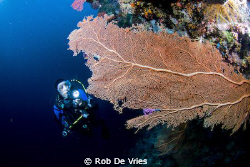 Wideangel picture of the beautifull Wakatobi reefs with G... by Rob De Vries