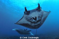 Manta point / Nusa Penida - Bali by Cenk Ceylanoglu
