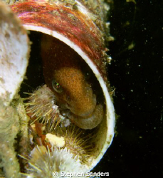 """friend""wolf eel in a pvc structure called the  geodome t... by Stephen Sanders"