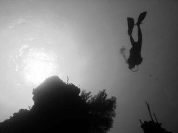 Grand Cayman, North Wall dive, depth 110 feet by Michael Schlenk