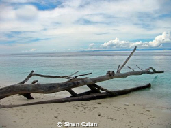 This shot was taken on an island at Raja Ampat while we d... by Sinan Oztan