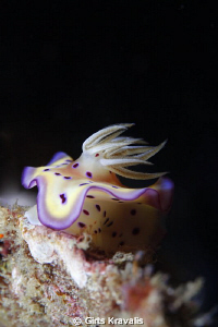 Nudibranchia by Girts Kravalis