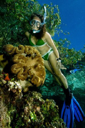 Snorkeling at the Mangroves, by Tunc Yavuzdogan