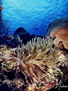 This image was taken while diving at Paradise Reef off Co... by Steven Anderson