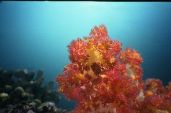 Taken at Mina al Fahal island, Oman.  Motormarine IIex. 3... by Alastair Mcgregor