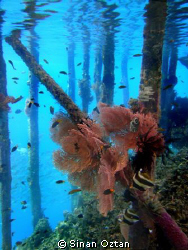 Under the jetty. Raja Ampat Kri Eco Resort by Sinan Oztan