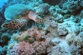 MotormarineIIEX, 20mm WA.  This turtle was oblivious to a... by Alastair Mcgregor