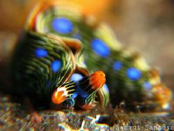 Beauty Maggot by Sangut Santoso