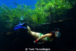 Snorkeling at the mangroves 2 :) by Tunc Yavuzdogan