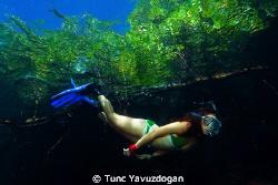 Snorkeling at the mangroves 2 :) by Tunc Yavuzdogan