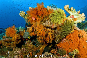 colors of the Banda Sea, D300-Tokina 10-15 by Larry Polster