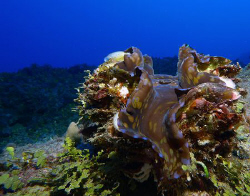 Fluted Clam by Martin Dalsaso