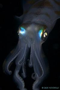 """Bright Eyes""  Night Dive in Manado - Tasik Ria House ree... by Debi Henshaw"