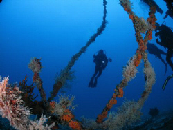 My diving buddy in the WIT Concrete by Juan Torres