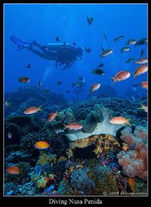 Reef Scene at Nusa Penida island, Bali Indonesia (Canon G... by Marco Waagmeester