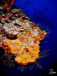 The color is incredible and water so clear.This is a norm... by Steven Anderson