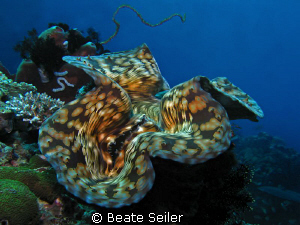 Giant clam, taken at Eden`s Garden with Canon S70 by Beate Seiler