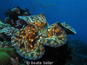 Giant clam, taken at Eden`s Garden with Canon S70 by Beate Seiler