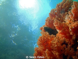 A shot from the passage at Raja Ampat by Sinan Oztan