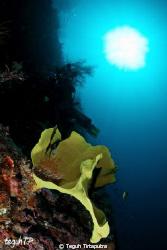 Coral Reef at Kapoposang Island, Makassar, Indonesia. Can... by Teguh Tirtaputra