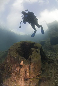Mr T over the same tree trunk!. Capernwray. D200, 10.5mm by Derek Haslam
