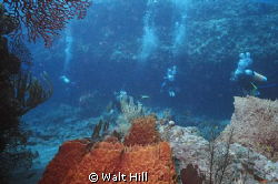 Cozumel - Palanchar Breaks by Walt Hill