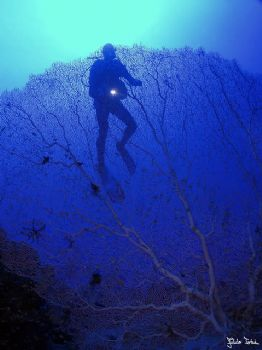 Sea fan with diver early morning. Taken with Olympus E-20... by Istvan Juhasz