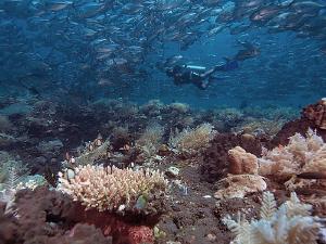 Diver, jacks and reef. Tulamben, Bali. by Doug Anderson