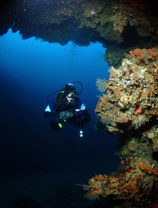 Diver in Telascica by Andy Kutsch