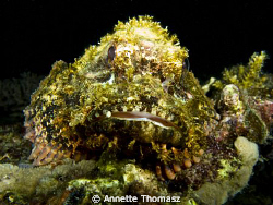 Stone fish Al-Capone, complete with stone cigar in mouth!... by Annette Thomasz