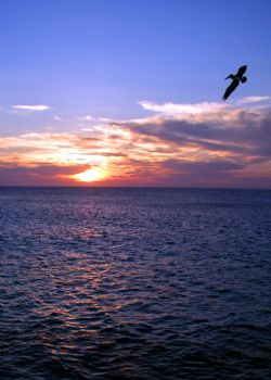 Sunset in Bonaire by Meredith Lynch