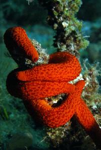 Hugging Starfish...... by Andy Kutsch