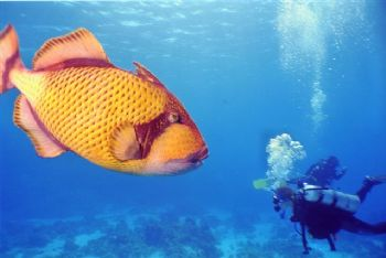 Red Sea,Nikonos V, 35 mm with 16 mm WU screw-on lens, YS-... by Nicolai Sosnowski