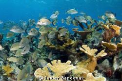 Cancun Reef by Javier Sandoval
