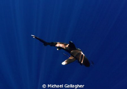 Oceanic whitetip in the sunbeams, Tokina 10-17mm with Mag... by Michael Gallagher