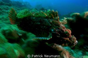 scorpion in motion by Patrick Neumann