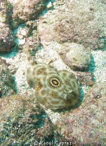 Taken in the Cortez Sea, in Baja Califormia by Raoul Caprez