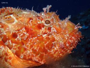 Scorpion fish (Scorpaena scrofa) Canon G10 & Inon D2000 by Bea & Stef Primatesta