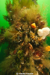 a mix of sponges, soft corall, anemones...., living on th... by Harald Fauske