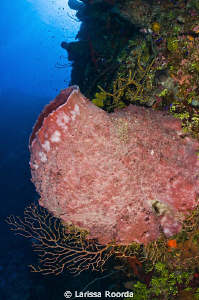 A barrel sponge at Mixing Bowl, Little Cayman. by Larissa Roorda