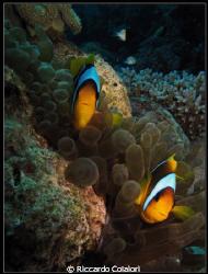 Lionfish - Dahab 2009 - Canon Powershot G10 + Canon Housi... by Riccardo Colaiori