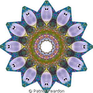 Kaliedoscopic image created from a shot of butterfly fish. by Patrick Reardon