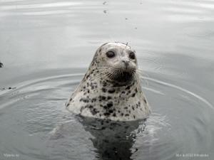 Harbour seal. by Bea & Stef Primatesta
