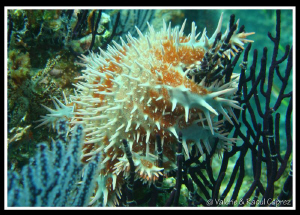 Nice but not nice for the coral ! by Raoul Caprez