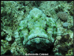 Stonefish - Canon Powershot G10 + Canon Housing WP-DC28 (... by Riccardo Colaiori